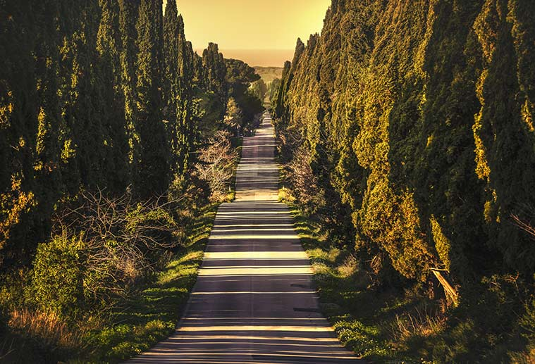 straight road lined with cypress trees in Viale dei Cipressi