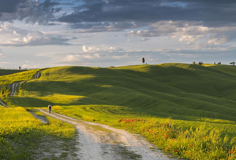 man hiking on dirt road in green rolling hills in tuscay's Val d'Orcia